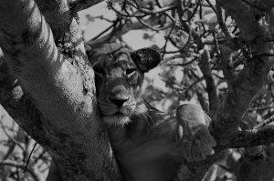 Africa | © Maarten van den Heuvel
