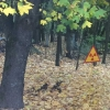 Bosco lungo la strada tra il centro città e la centrale di Černobyl'