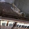 Pripjat', appartamento abbandonato, stanza con pianoforte